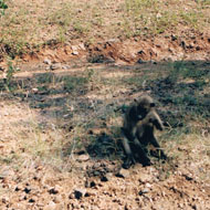 South Africa 1994